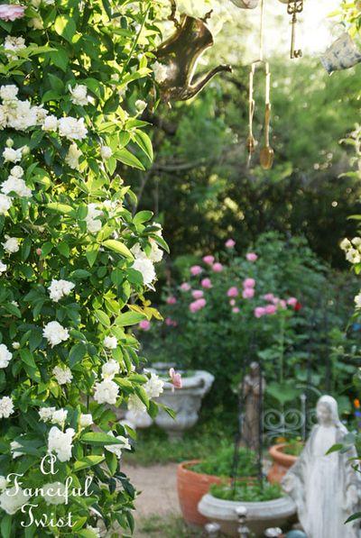 In my garden 12