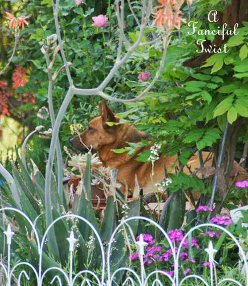 In my garden 18