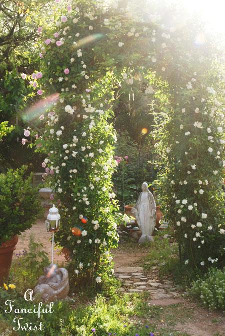 In my garden 21