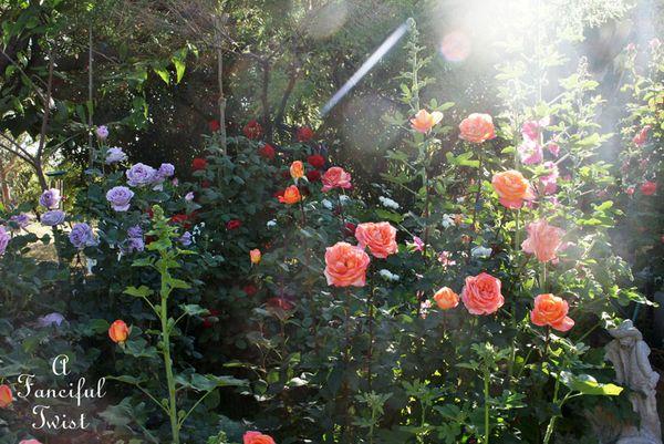 Secret garden 8