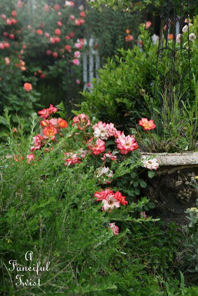 Secret garden 44