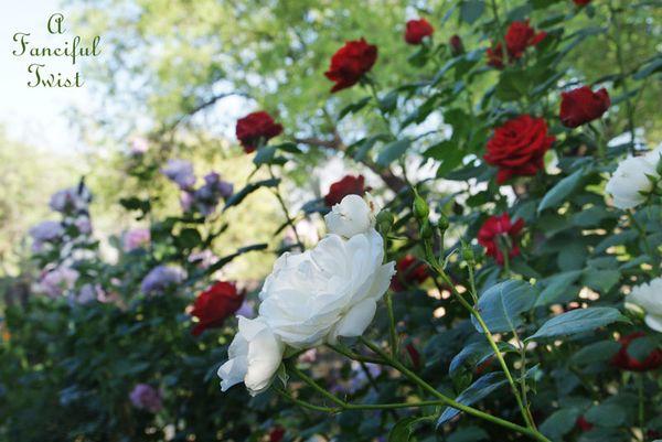 Secret garden 10