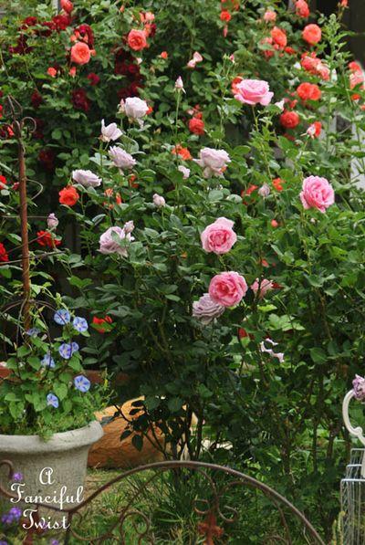 Secret garden 39