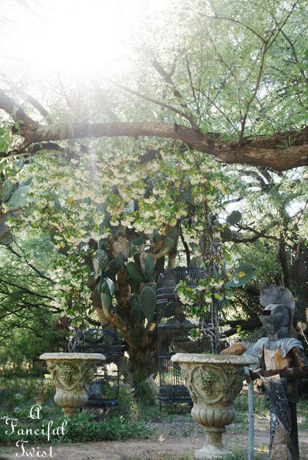 Garden 15