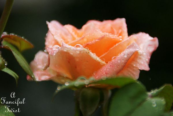 Rain flower 22