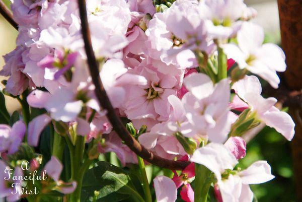Blooming 17
