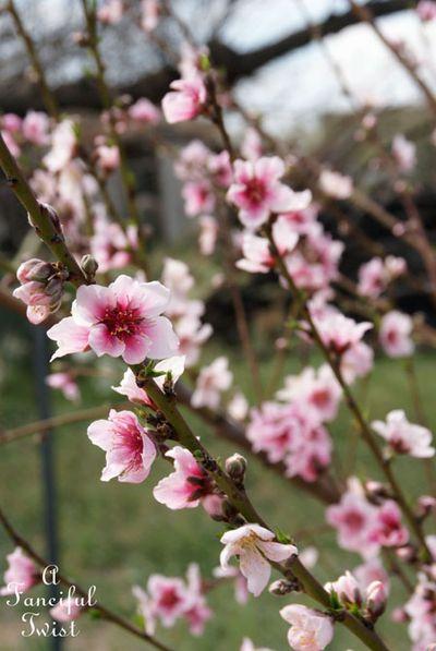 Blooming 7
