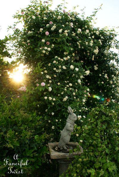 Rose arbor days 8