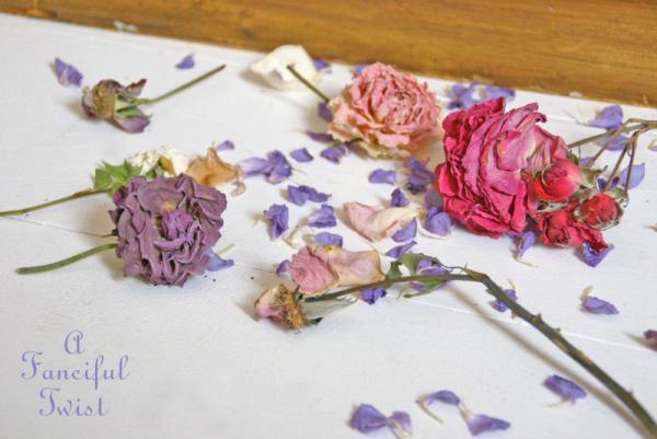 Dried flowers 7
