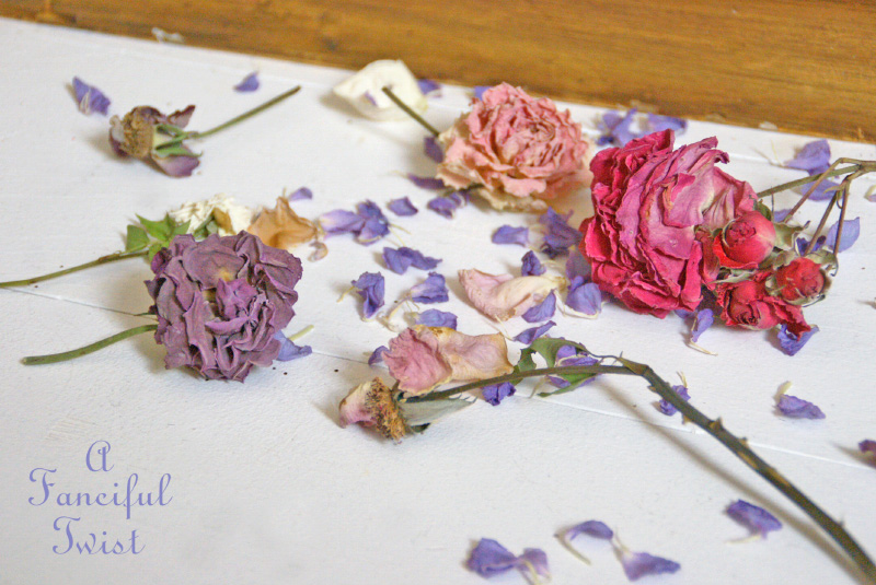 Dried flowers 7
