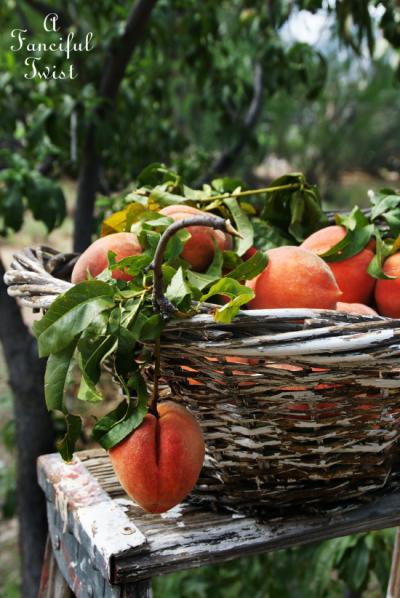 Peach season 7
