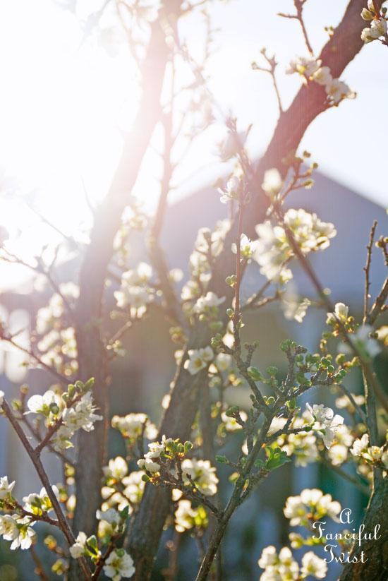 Spring magic 12
