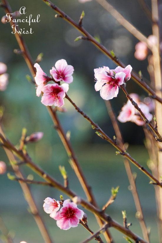 Spring magic 18