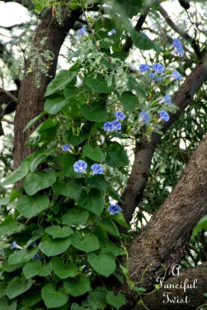 September garden 5