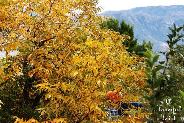Autumn 17