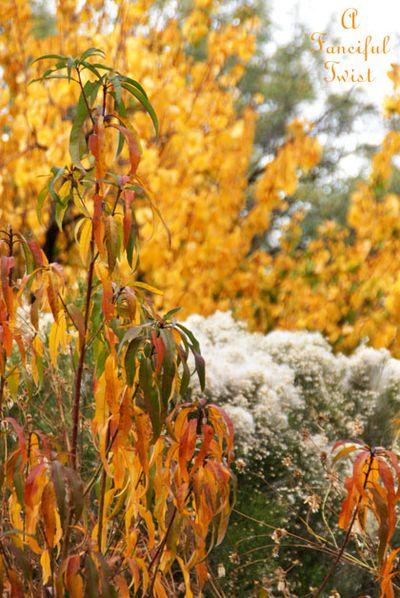 Fall garden 15