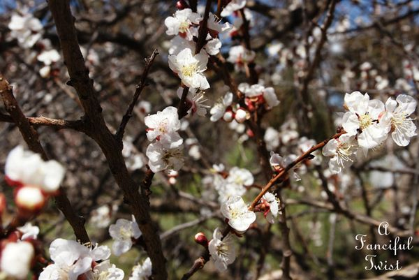 Blossoms 10