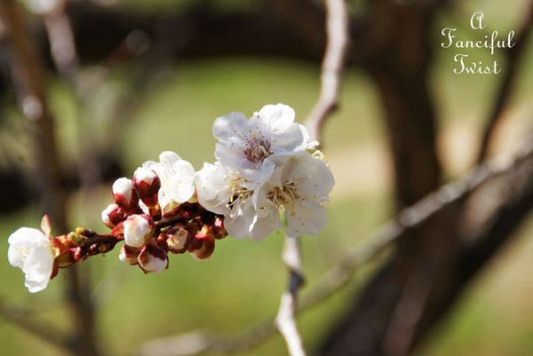 Blossoms 9