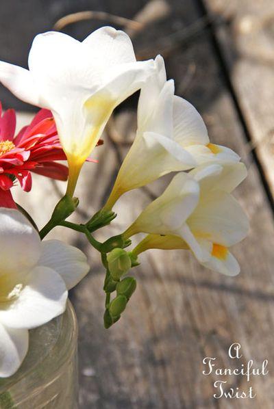 Blossoms 22
