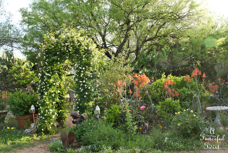In my garden 8