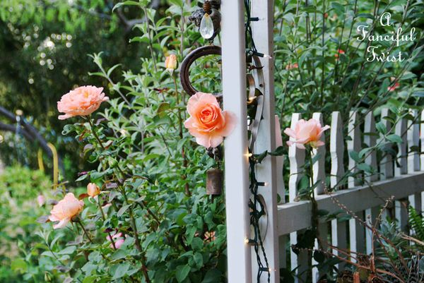 In my garden 11