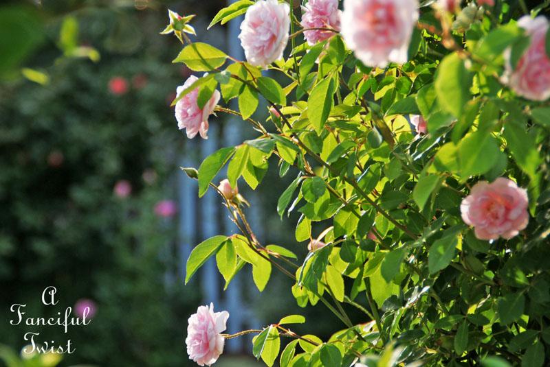 In my garden 23