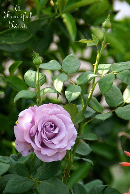 In my garden 22