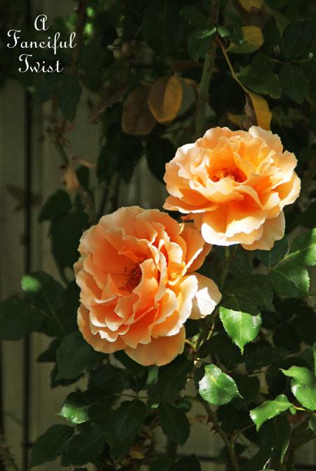 In my garden 27