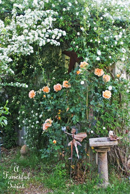 In my garden 9