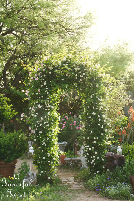 In my garden 14