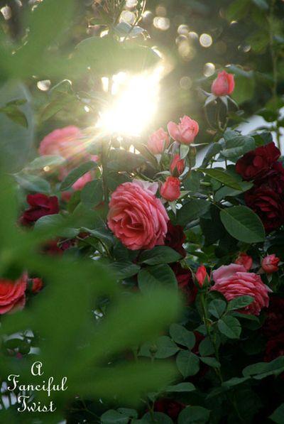 Secret garden 42