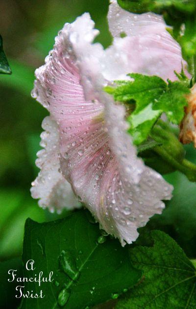 Rain flower 1