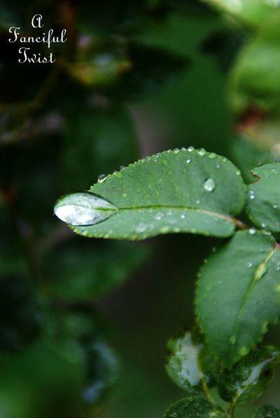 Rain flower 20
