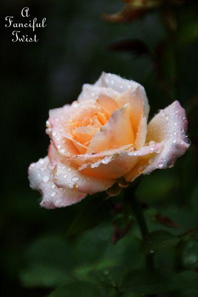 Rain flower 19