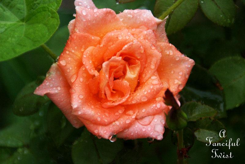 Rain flower 21