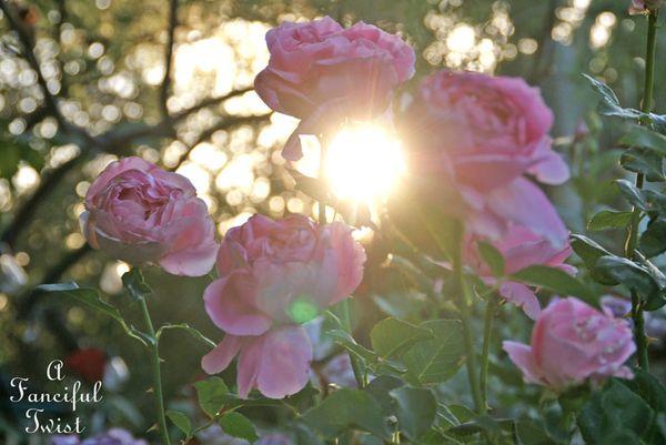Rose season 9