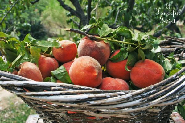 Peach season 8