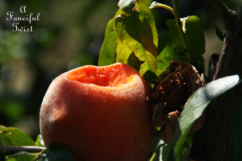 Peach season 6
