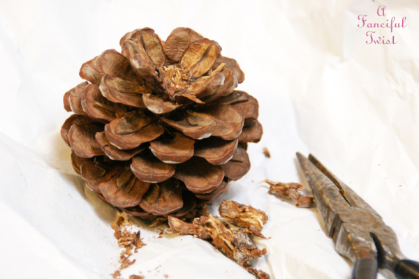 Pine cone craft 2a