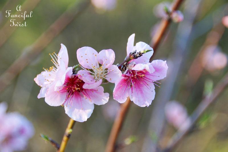 Spring magic 17
