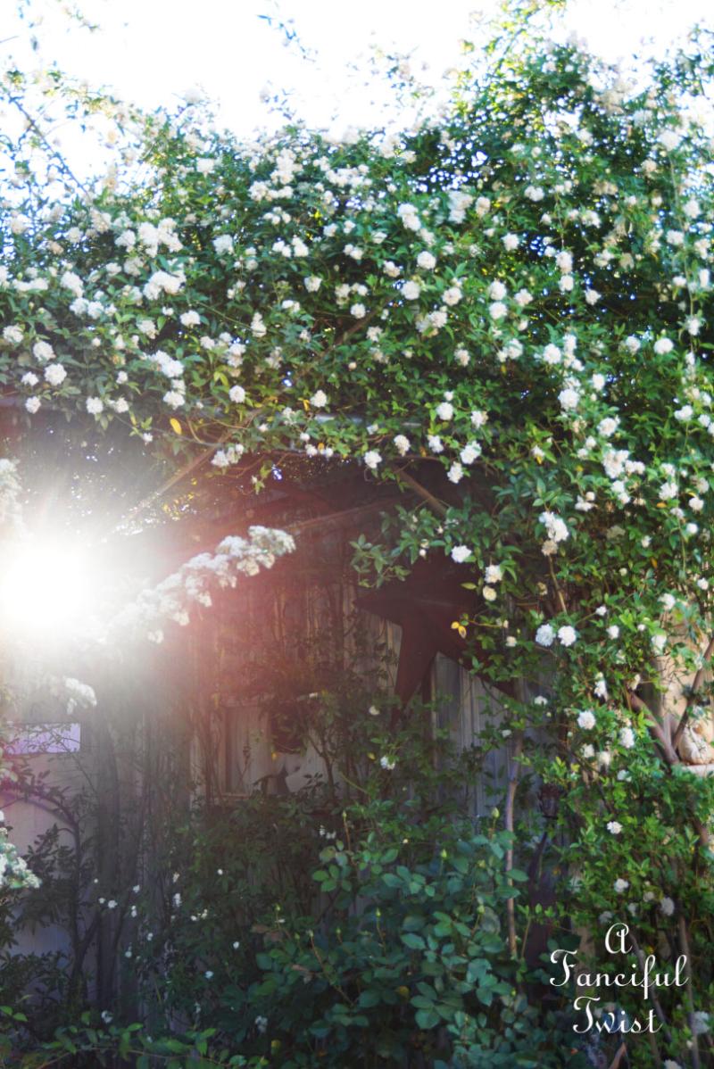Garden magic 3