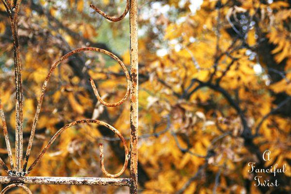 Fall garden 12