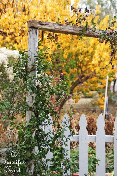 Fall garden 16