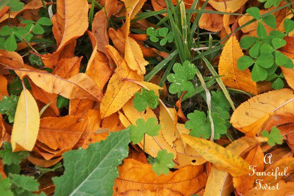 Fall garden 19