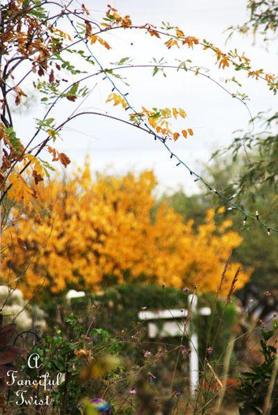 Fall garden 3