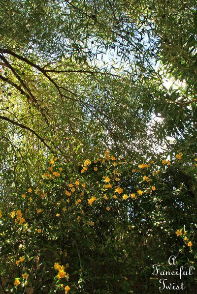 Blossoms 16