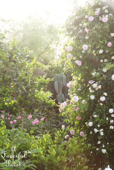 In my garden 25