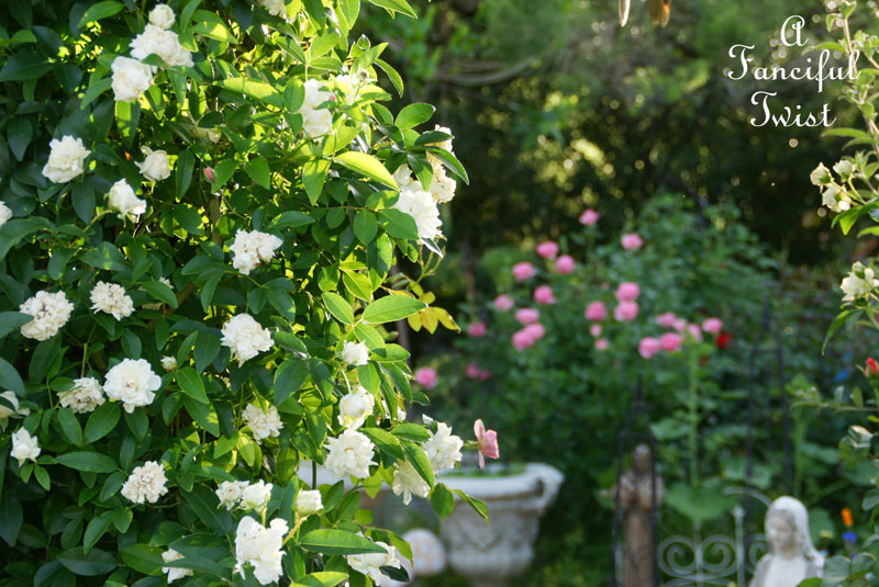 In my garden 16