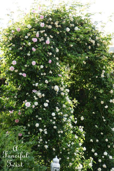 In my garden 15