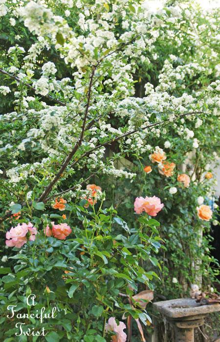 In my garden 6